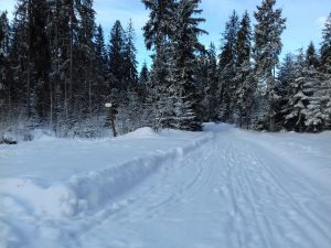wycieczka narciarska Zgorzelisko - tarasówka