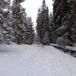 wycieczka narciarska - polana zgorzelisko