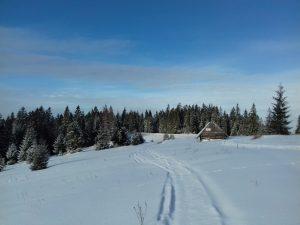 biegówki na Tarasówce
